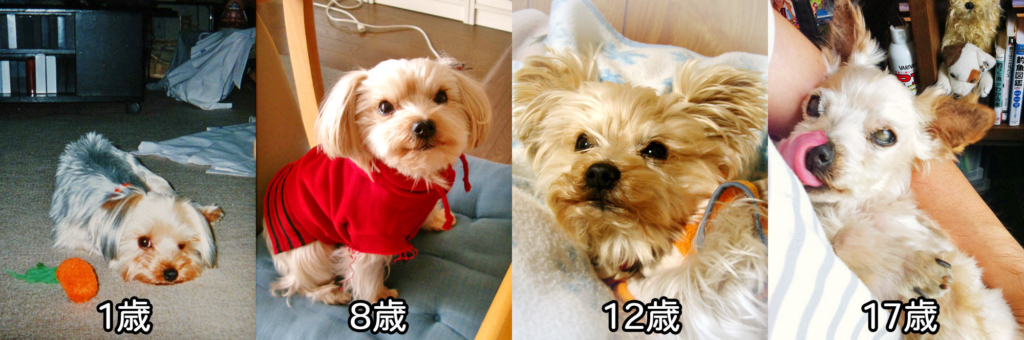 筆者のかつての愛犬の写真、1歳から17歳までの外観の変化を表している