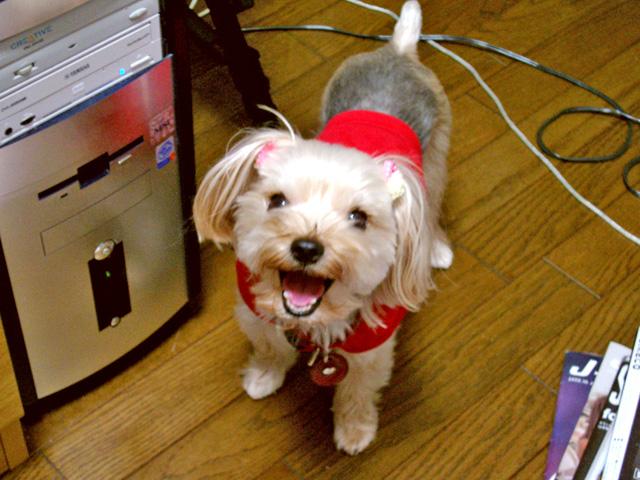 筆者のかつての愛犬の写真