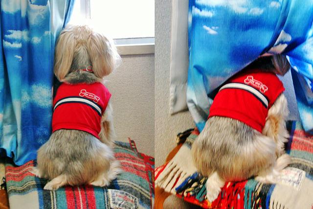 筆者のかつての愛犬の写真、異なるアングルから撮った2枚の写真を1枚にまとめている