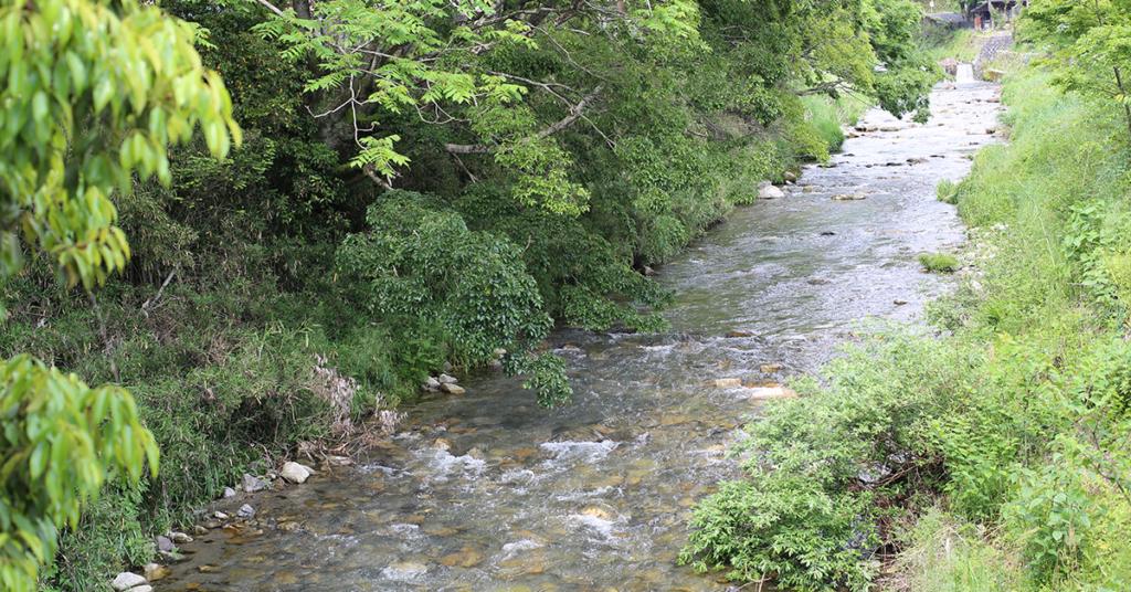 「京都大原ブルーベリー農園」の近くの川の写真