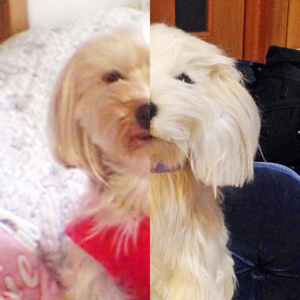 筆者のかつての愛犬と、そっくりなぬいぐるみの比較写真