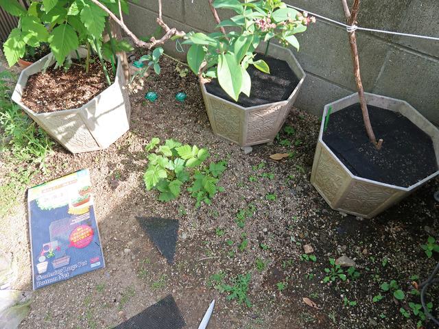 複数の植木鉢が並んでいる様子