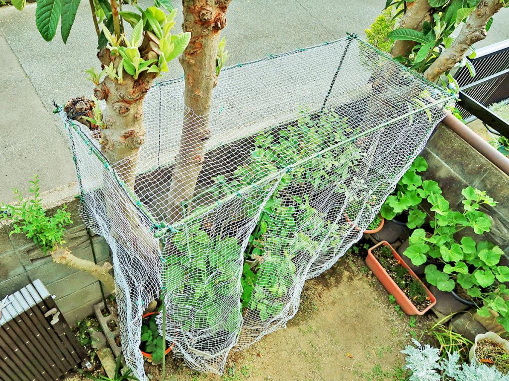 園芸支柱を組み合わせて作られた防鳥ネットハウスの写真