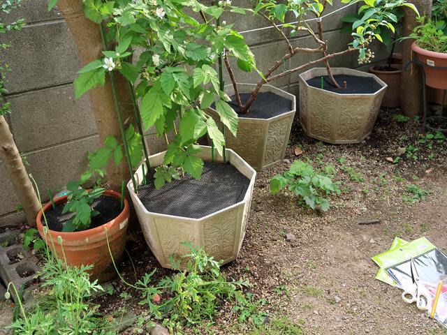 すべての植木鉢に鉢底ネットを設置した様子