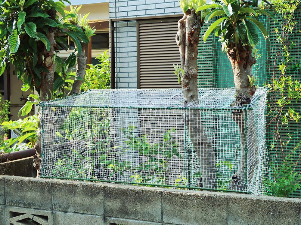 ハウスの骨組みに鳥よけネットを取り付けた様子