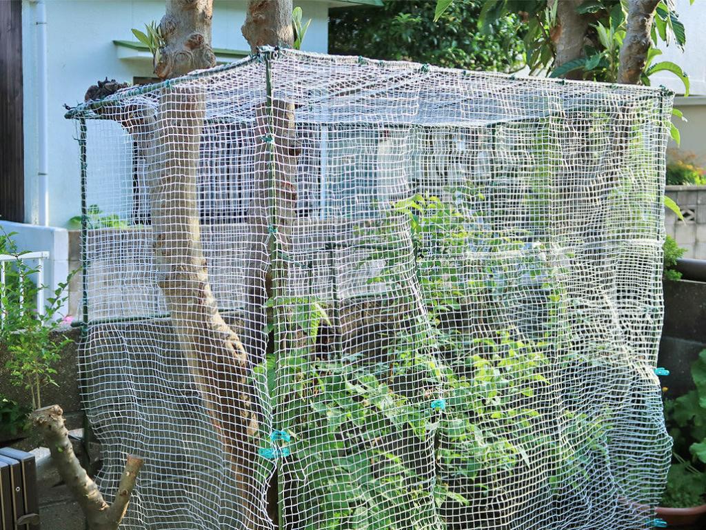 完成した「鳥よけネットハウス」の写真