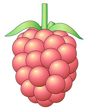 ピンク色の実のイラスト