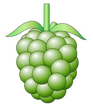 緑色の実のイラスト