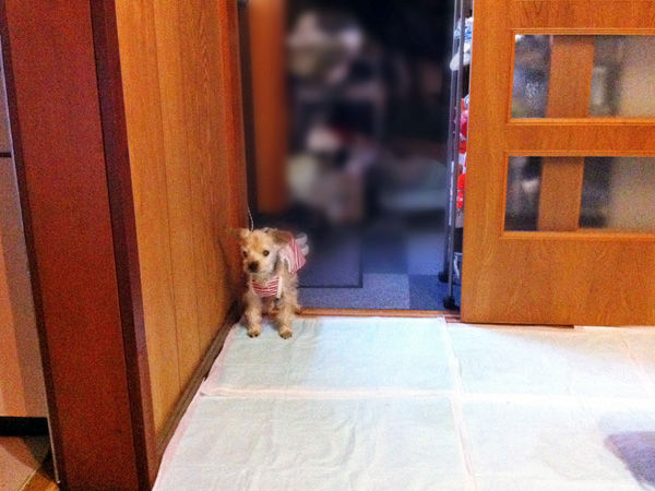 愛犬ポピィの写真